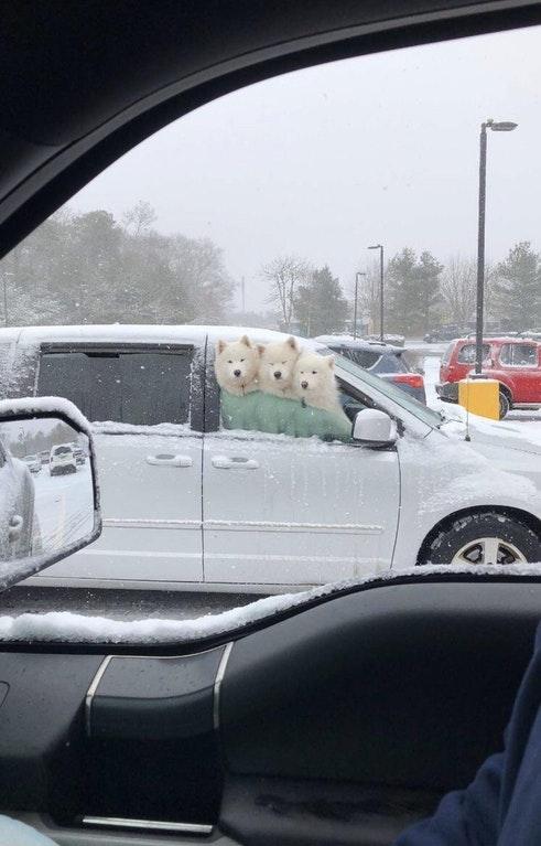 perro de 3 cabezas