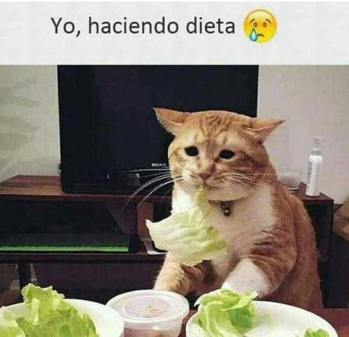 Hasta el gato se ha puesto a dieta