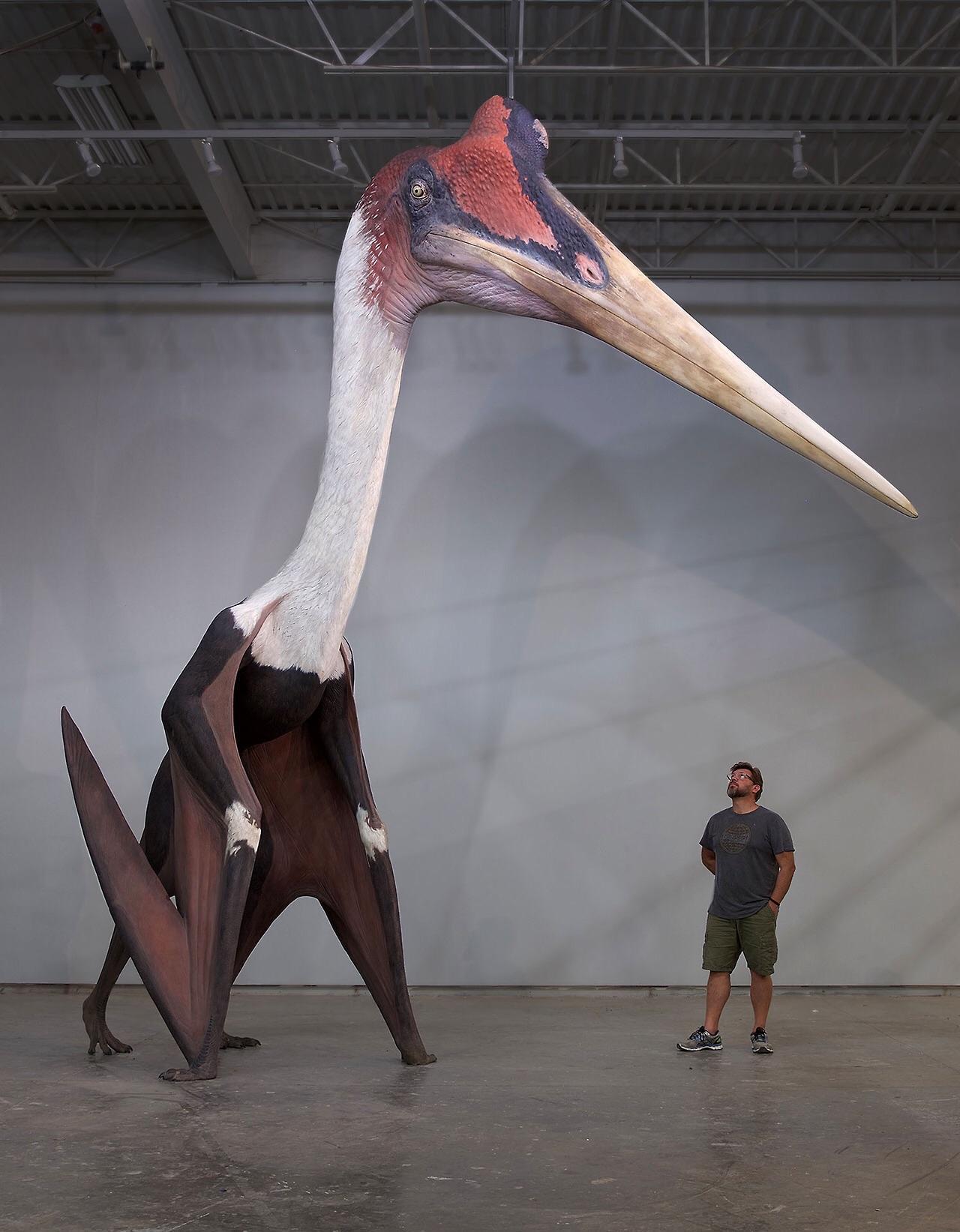 Quetzalcoatlus northropi a escala
