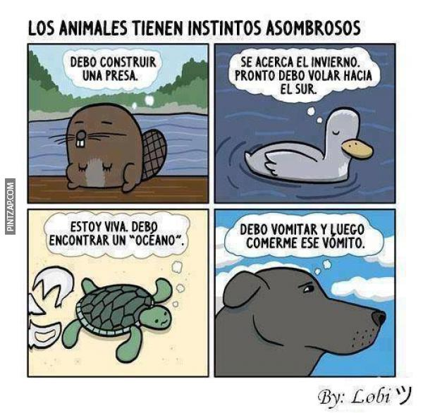 Los animales tienen instintos asombrosos