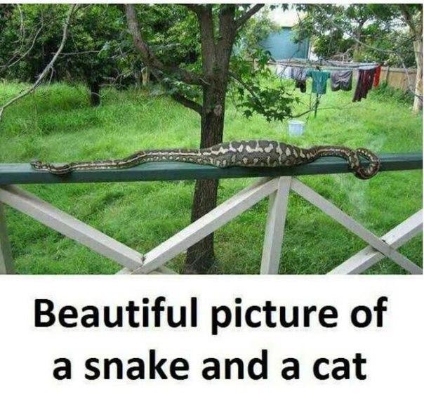 Fantástica imagen de una serpiente y un gato