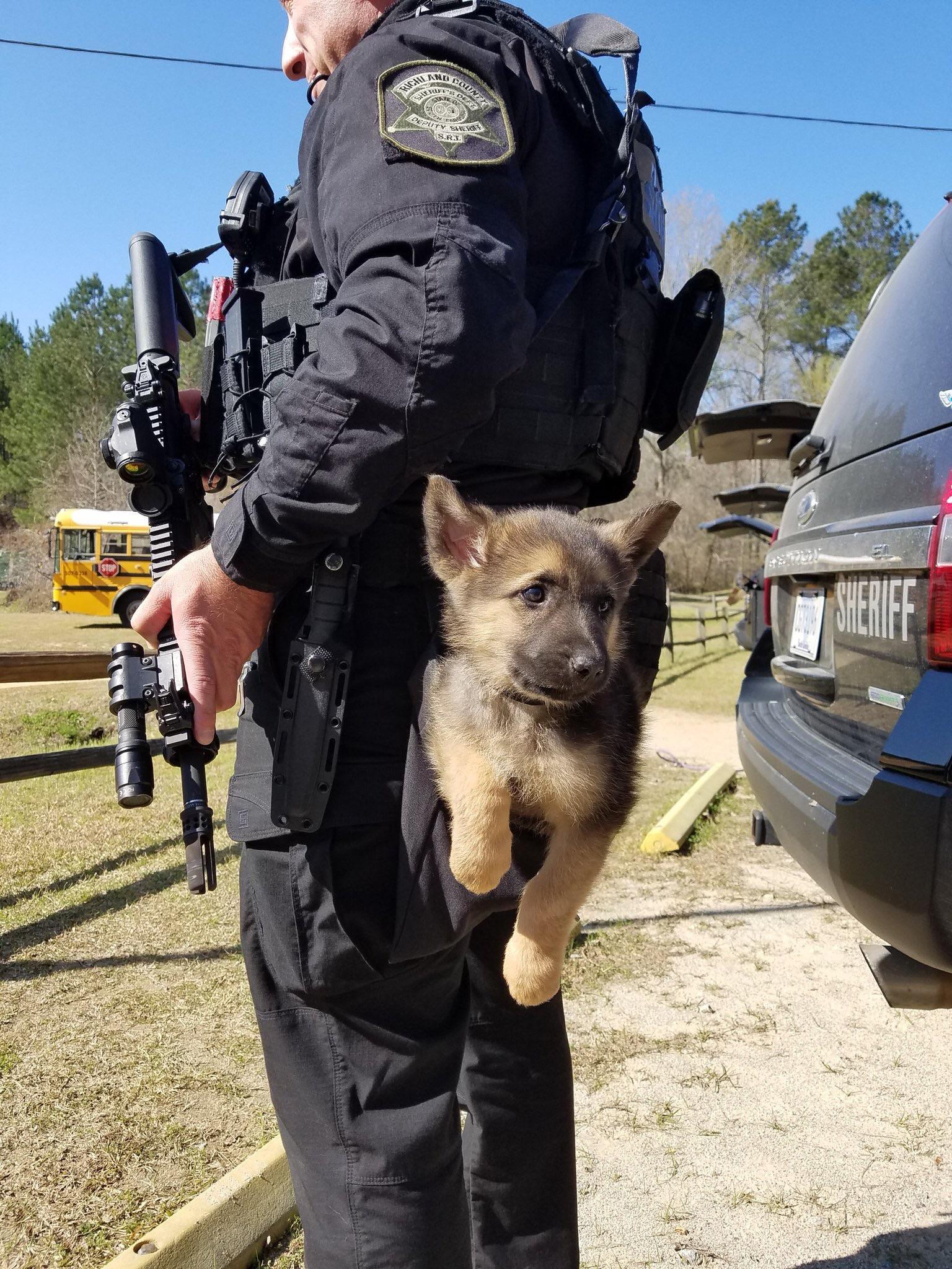 Cachorro policía