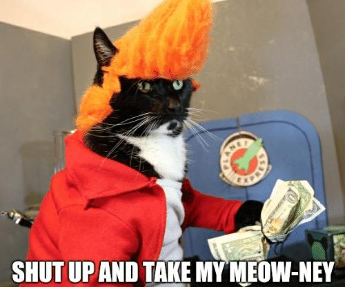 Shut up cat