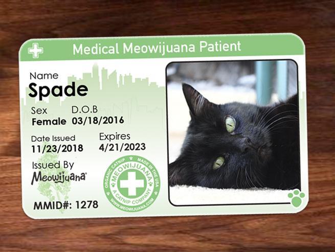 Gato Meowijuana