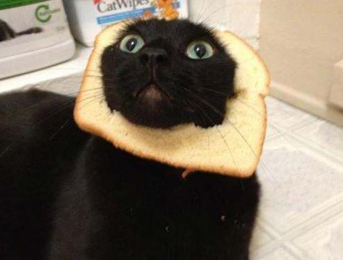 Gato tostada