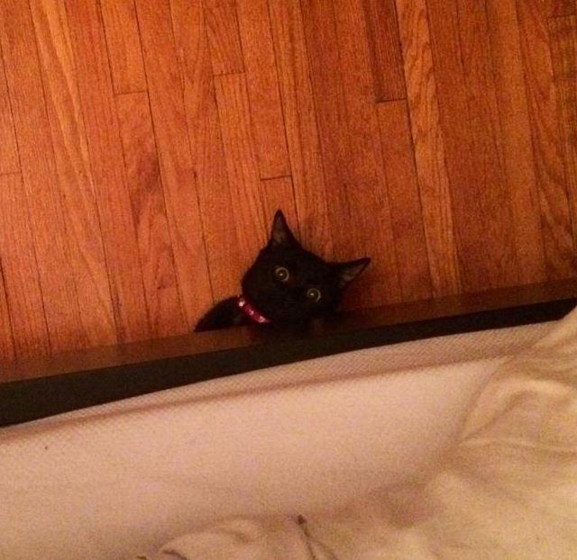 Demonios bajo la cama