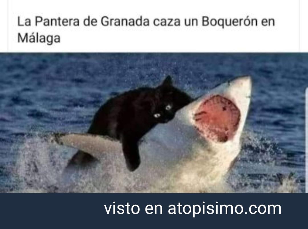 La pantera de Granada caza a un Boquerón en Málaga