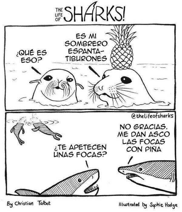 Viñeta focas con piña