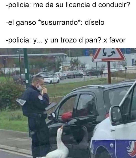 pan para el ganso policía