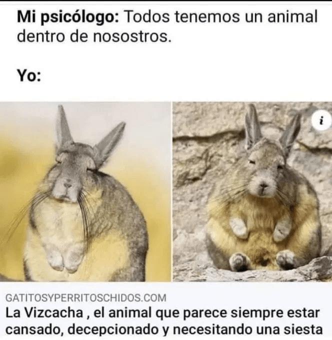 Tu animal interior